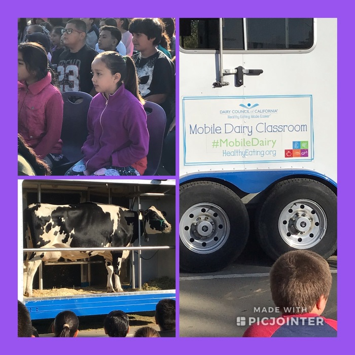 Mobile Dairy Visit