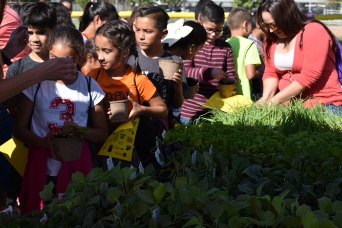 Students picking out plants