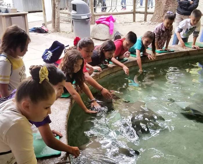 students petting stingrays
