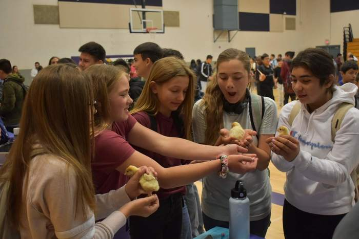 Students visiting a stand with chicks