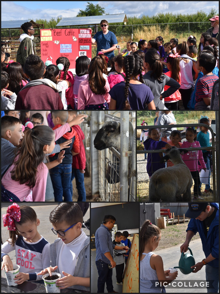 AG day collage
