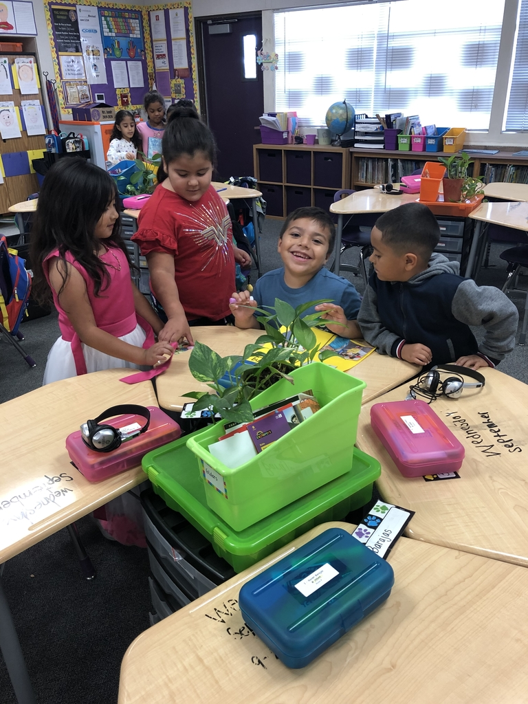Mrs. Sunde's class learning about living and non-living things during STEAM time.
