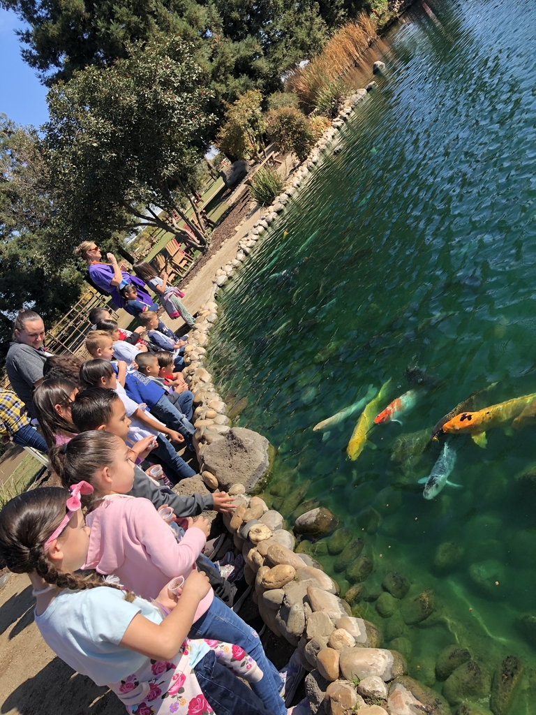 Kids looking at fish in the pond