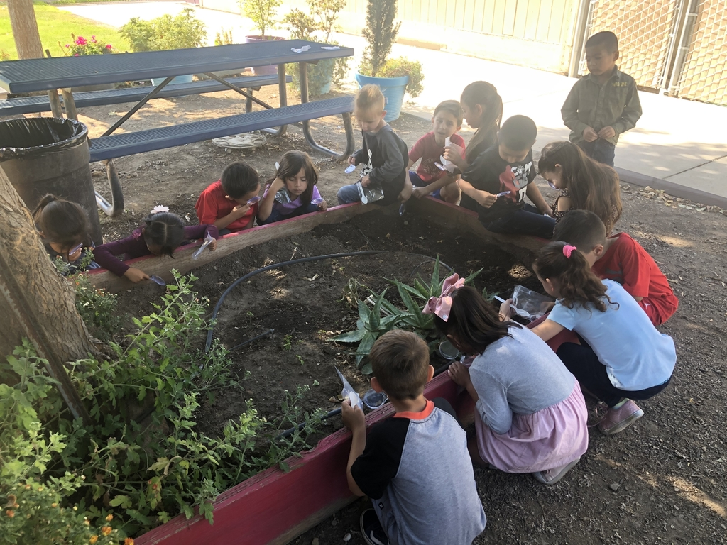 Students observing the different types of soil